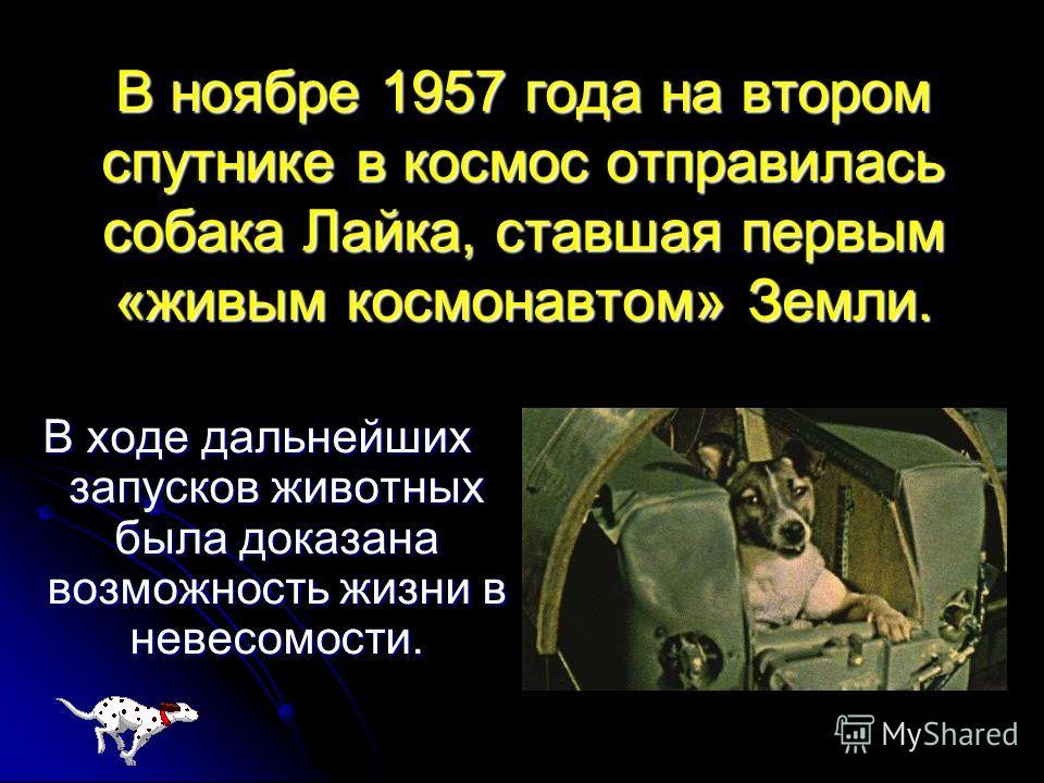 В ноябре 1957 года на втором спутнике в космос отправилась собака Лайка, ставшая первым «живым космонавтом» Земли. В ходе дальнейших запусков животных была доказана возможность жизни в невесомости.