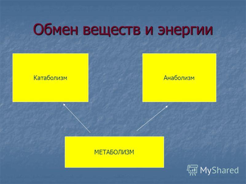 Обмен веществ и энергии АнаболизмКатаболизм МЕТАБОЛИЗМ