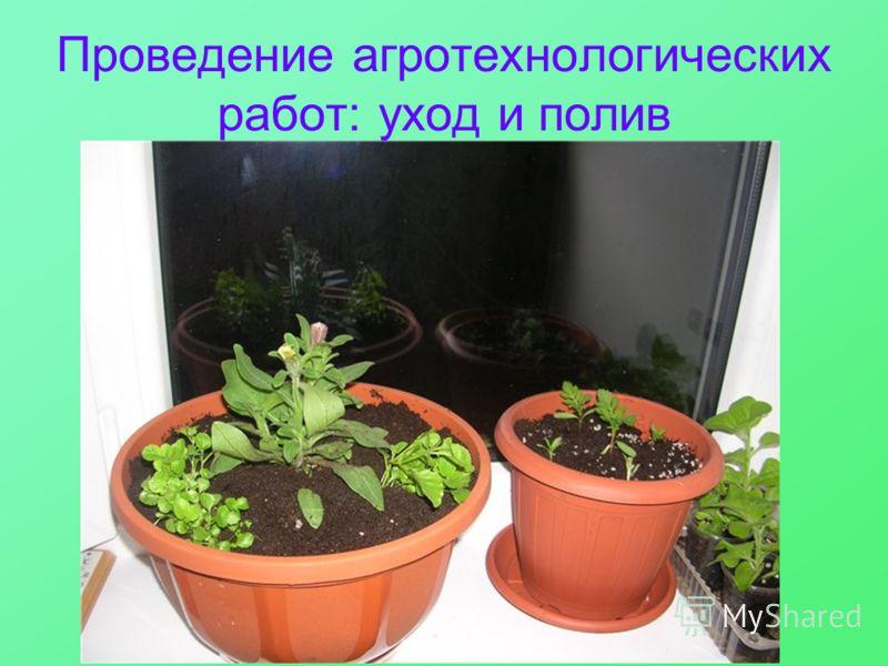 Проведение агротехнологических работ: уход и полив