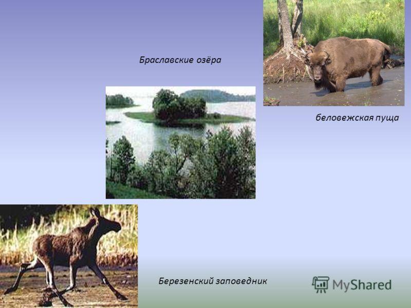 Браславские озёра Березенский заповедник беловежская пуща