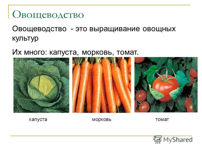 Овощеводство Овощеводство - это выращивание овощных культур Их много: капуста, морковь, томат. капустаморковьтомат