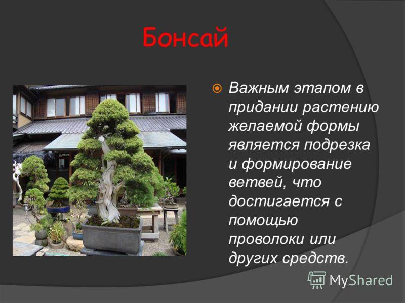 Бонсай Важным этапом в придании растению желаемой формы является подрезка и формирование ветвей, что достигается с помощью проволоки или других средств.
