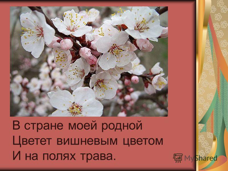 В стране моей родной Цветет вишневым цветом И на полях трава.
