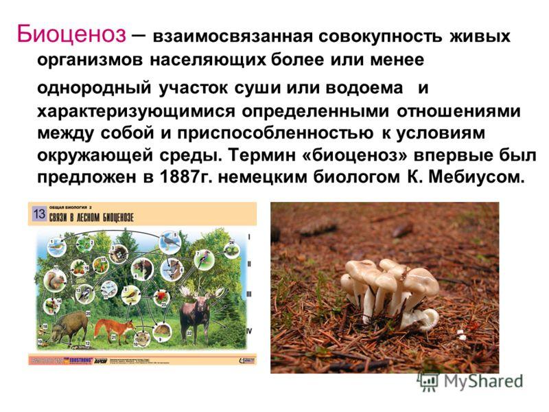 Биоценоз – взаимосвязанная совокупность живых организмов населяющих более или менее однородный участок суши или водоема и характеризующимися определенными отношениями между собой и приспособленностью к условиям окружающей среды. Термин «биоценоз» впе