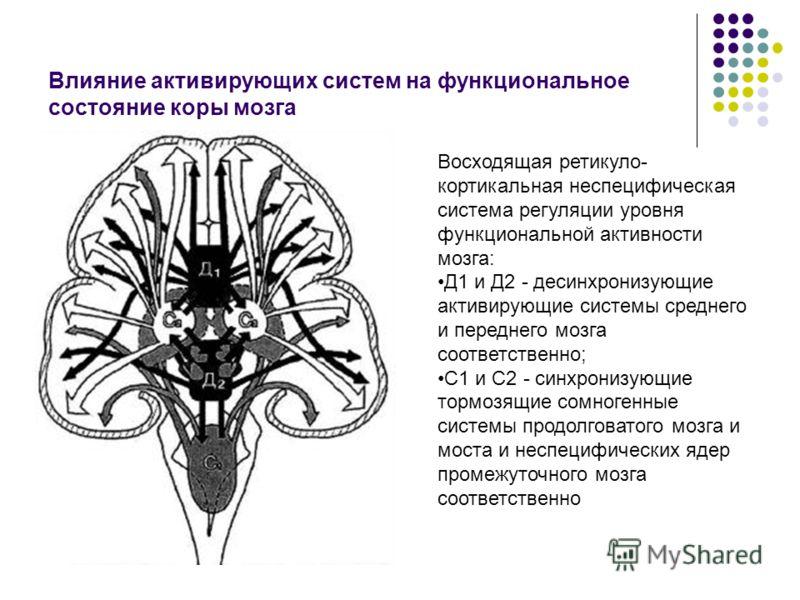 Влияние активирующих систем на функциональное состояние коры мозга Восходящая ретикуло- кортикальная неспецифическая система регуляции уровня функциональной активности мозга: Д1 и Д2 - десинхронизующие активирующие системы среднего и переднего мозга