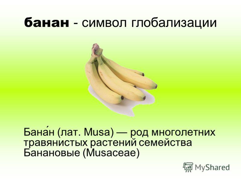 банан - символ глобализации Бана́н (лат. Musa) род многолетних травянистых растений семейства Банановые (Musaceae)