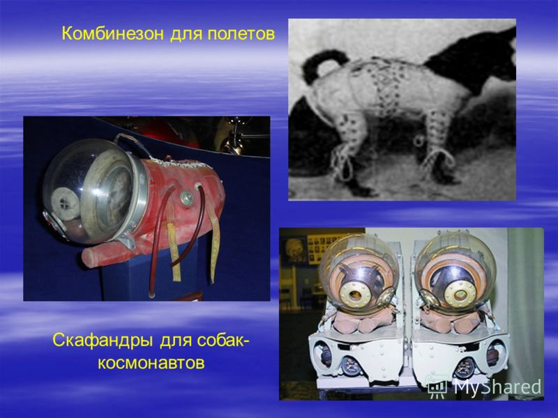 Комбинезон для полетов Скафандры для собак- космонавтов