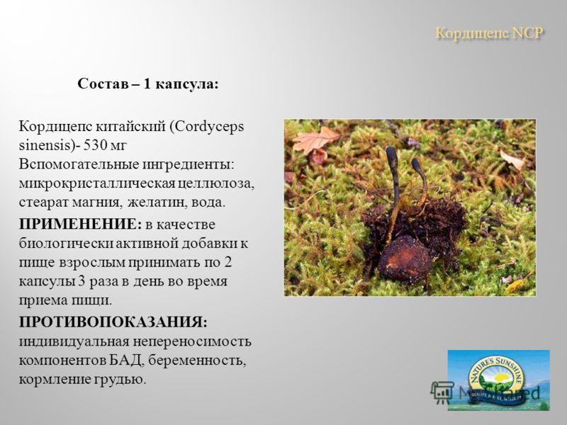 Кордицепс NCP Состав – 1 капсула : Кордицепс китайский (Cordyceps sinensis)- 530 мг Вспомогательные ингредиенты : микрокристаллическая целлюлоза, стеарат магния, желатин, вода. ПРИМЕНЕНИЕ : в качестве биологически активной добавки к пище взрослым при
