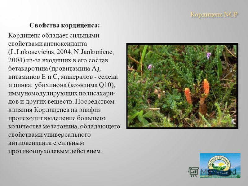 Кордицепс NCP Свойства кордицепса : Кордицепс обладает сильными свойствами антиоксиданта ( L. Lukosevicius, 2004, N. Jankuniene, 2004) из - за входящих в его состав бетакаротина ( провитамина А ), витаминов Е и С, минералов - селена и цинка, убихинон