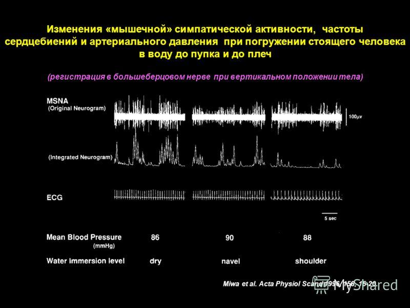 Изменения «мышечной» симпатической активности, частоты сердцебиений и артериального давления при погружении стоящего человека в воду до пупка и до плеч (регистрация в большеберцовом нерве при вертикальном положении тела) Miwa et al. Acta Physiol Scan