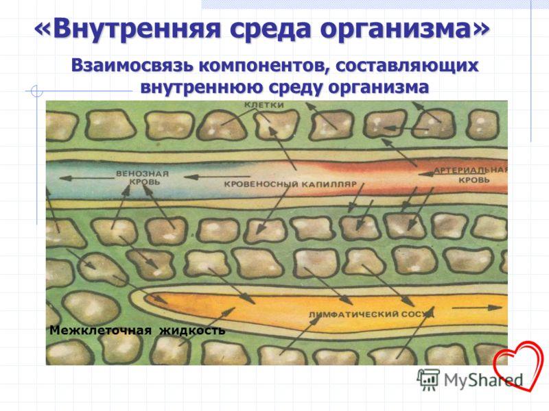 Внутренняя среда - единая система жидкостей – является естественным продолжением водной основы клеток.
