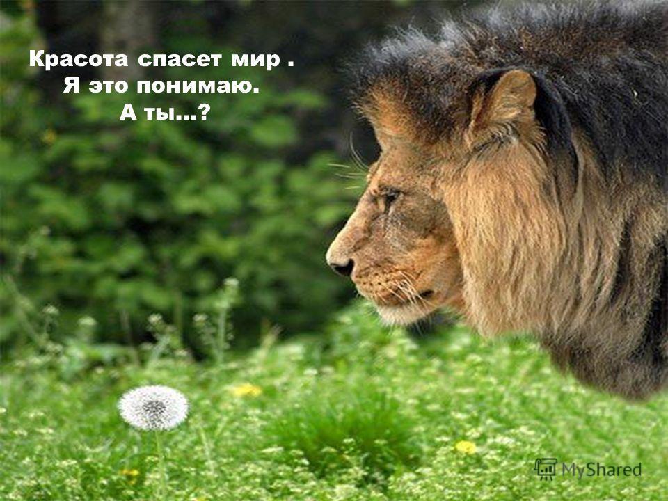Красота спасет мир. Я это понимаю. А ты…?