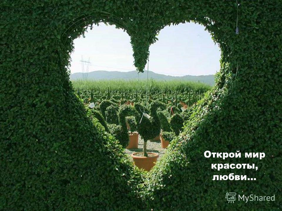 Открой мир красоты, любви…