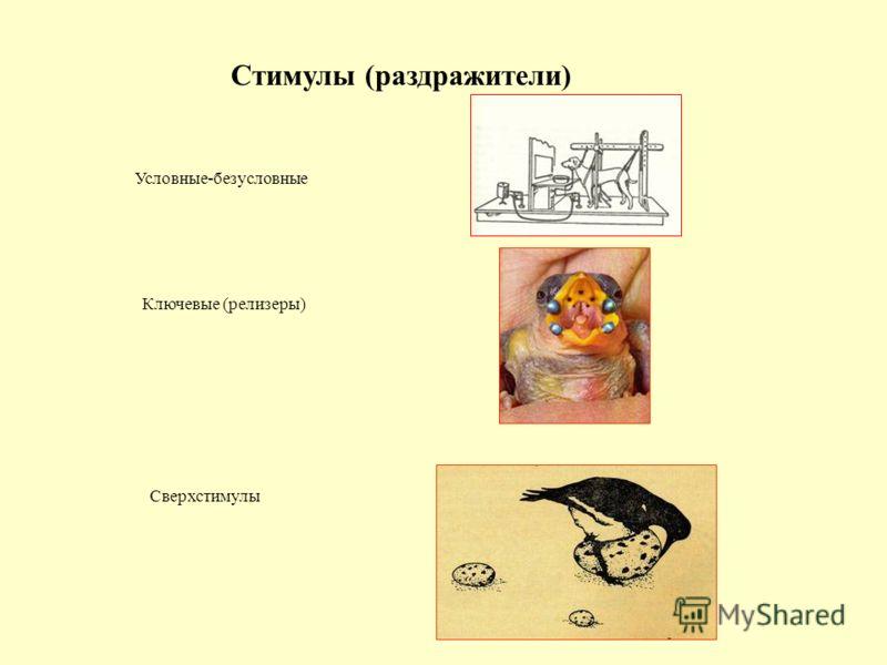 Стимулы (раздражители) Условные-безусловные Ключевые (релизеры) Сверхстимулы