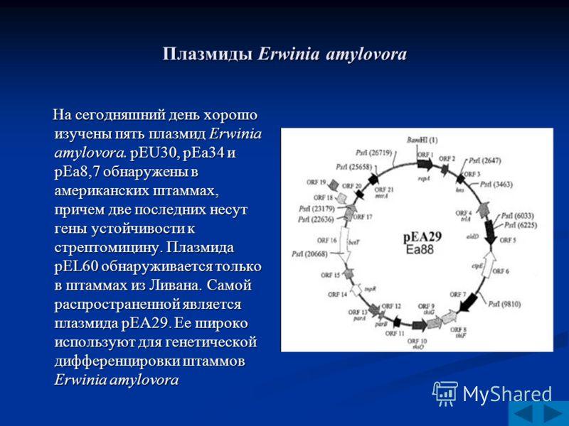 Плазмиды Erwinia amylovora На сегодняшний день хорошо изучены пять плазмид Erwinia amylovora. pEU30, pEa34 и pEa8,7 обнаружены в американских штаммах, причем две последних несут гены устойчивости к стрептомицину. Плазмида pEL60 обнаруживается только