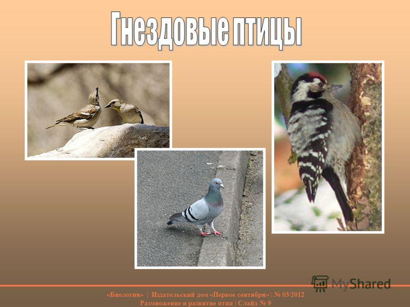 «Биология» | Издательский дом «Первое сентября» | 03/2012 Размножение и развитие птиц | Слайд 9
