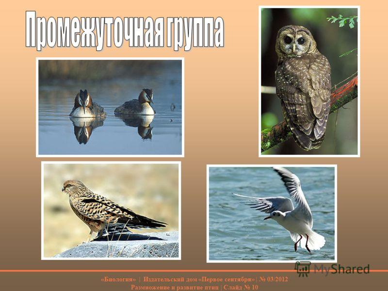 «Биология» | Издательский дом «Первое сентября» | 03/2012 Размножение и развитие птиц | Слайд 10