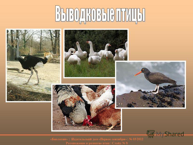 Размножение и развитие птиц слайд 8