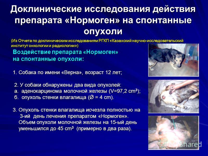 Доклинические исследования действия препарата «Нормоген» на спонтанные опухоли Воздействие препарата «Нормоген» на спонтанные опухоли: 1. Собака по имени «Верна», возраст 12 лет; 2. У собаки обнаружены два вида опухолей: 2. У собаки обнаружены два ви
