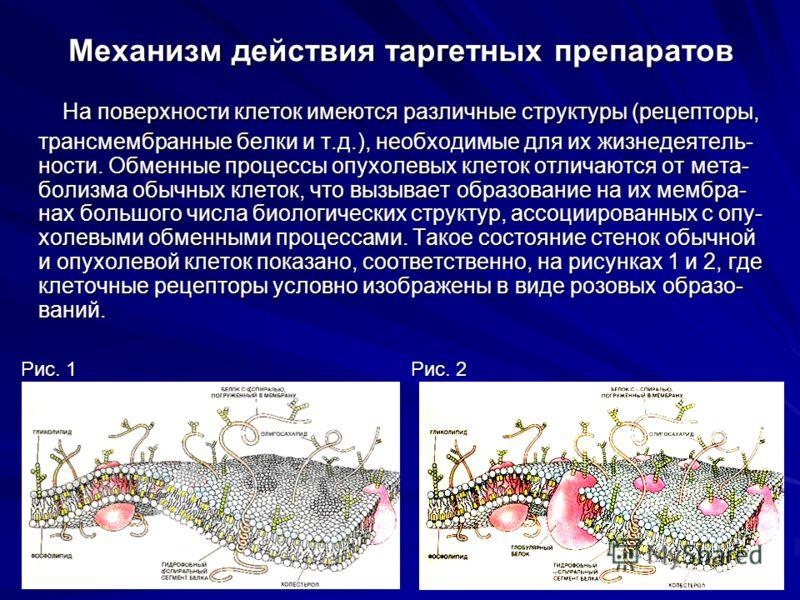 Механизм действия таргетных препаратов На поверхности клеток имеются различные структуры (рецепторы, трансмембранные белки и т.д.), необходимые для их жизнедеятель- ности. Обменные процессы опухолевых клеток отличаются от мета- болизма обычных клеток