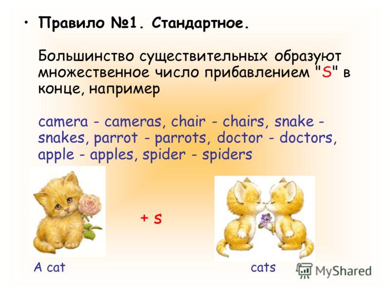 Правило 1. Стандартное. Большинство существительных образуют множественное число прибавлением S в конце, например camera - cameras, chair - chairs, snake - snakes, parrot - parrots, doctor - doctors, apple - apples, spider - spiders A catcats + s