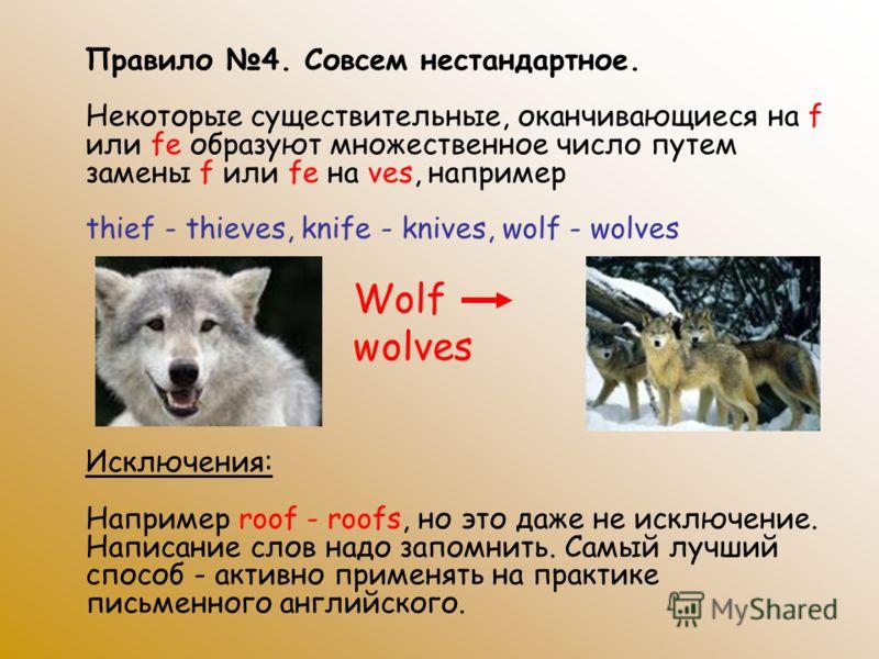 Правило 4. Совсем нестандартное. Некоторые существительные, оканчивающиеся на f или fe образуют множественное число путем замены f или fe на ves, например thief - thieves, knife - knives, wolf - wolves Исключения: Например roof - roofs, но это даже н