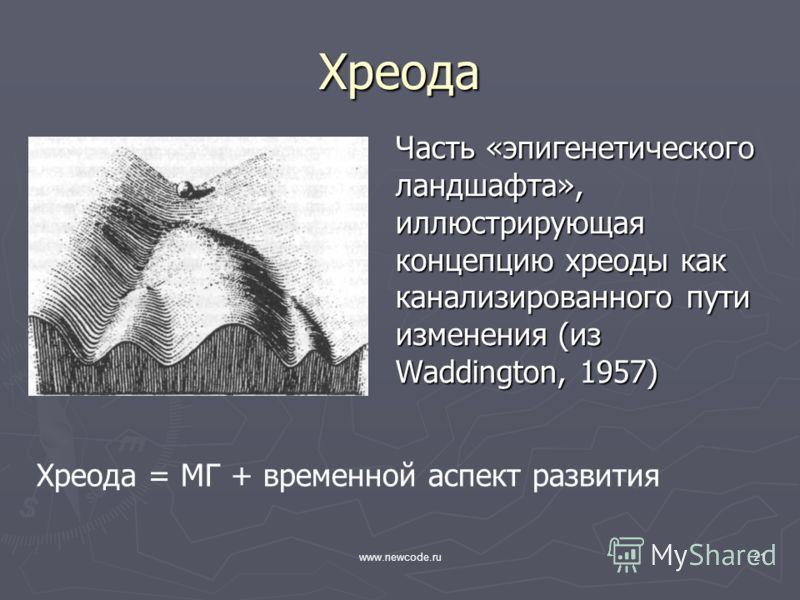 www.newcode.ru21 Хреода Часть «эпигенетического ландшафта», иллюстрирующая концепцию хреоды как канализированного пути изменения (из Waddington, 1957) Хреода = МГ + временной аспект развития