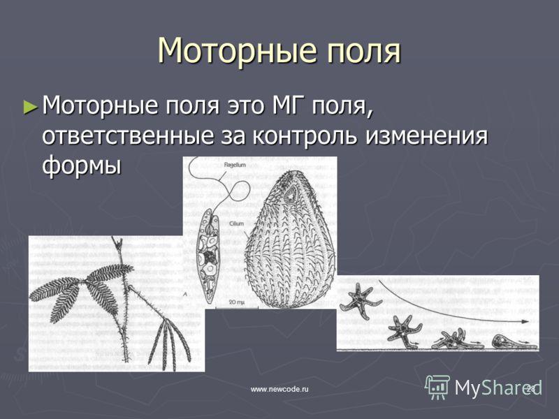 www.newcode.ru28 Моторные поля Моторные поля это МГ поля, ответственные за контроль изменения формы Моторные поля это МГ поля, ответственные за контроль изменения формы