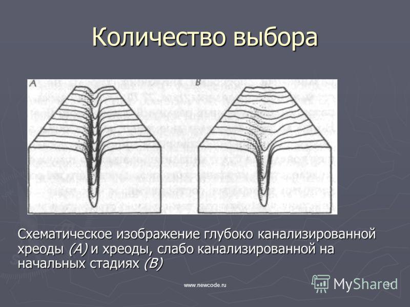 www.newcode.ru31 Количество выбора Схематическое изображение глубоко канализированной хреоды (А) и хреоды, слабо канализированной на начальных стадиях (В)