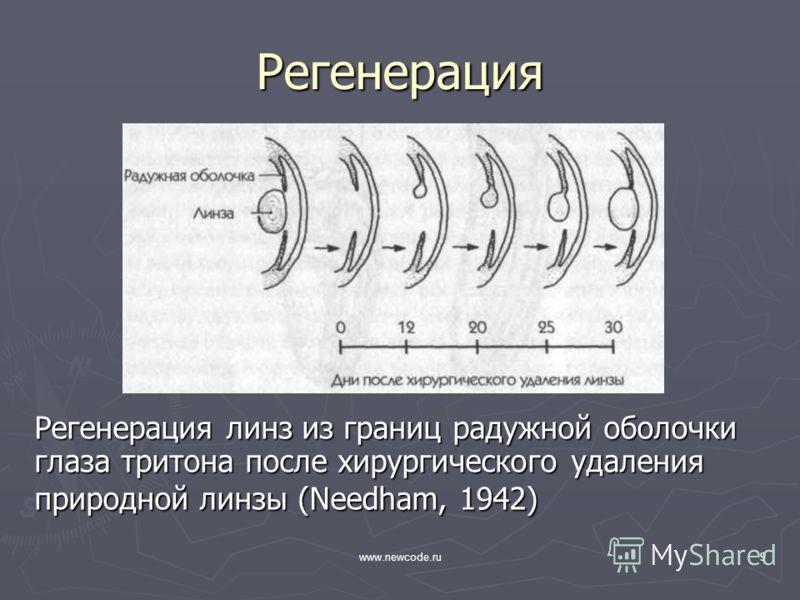 www.newcode.ru9 Регенерация Регенерация линз из границ радужной оболочки глаза тритона после хирургического удаления природной линзы (Needham, 1942)