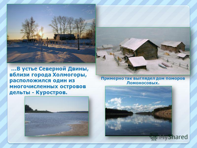Примерно так выглядел дом поморов Ломоносовых....В устье Северной Двины, вблизи города Холмогоры, расположился один из многочисленных островов дельты - Куростров.