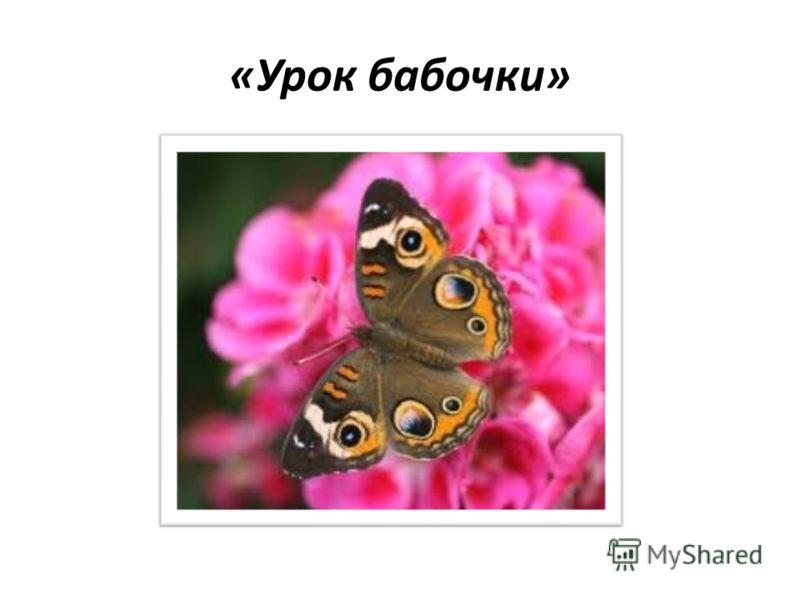 «Урок бабочки»