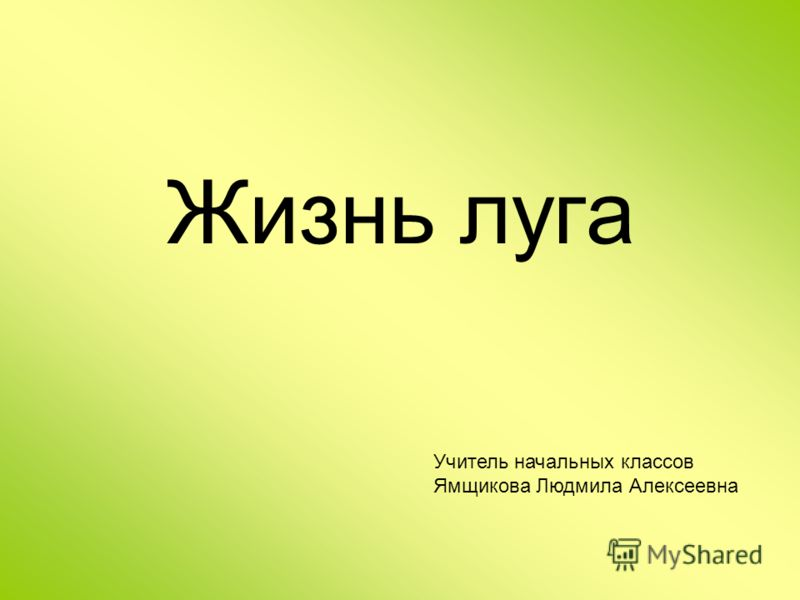 Жизнь луга Учитель начальных классов Ямщикова Людмила Алексеевна