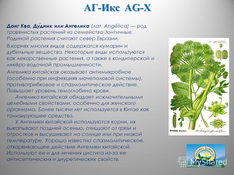 АГ-Икс AG-X Донг Ква, Дудник или Ангелика (лат. Angélica) род травянистых растений из семейства Зонтичные. Родиной растения считают север Евразии. В корнях многих видов содержатся кумарин и дубильные вещества. Некоторые виды используются как лекарств