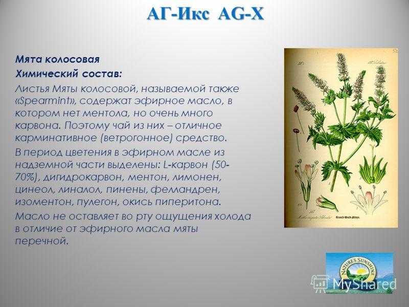 АГ-Икс AG-X Мята колосовая Химический состав: Листья Мяты колосовой, называемой также «Spearmint», содержат эфирное масло, в котором нет ментола, но очень много карвона. Поэтому чай из них – отличное карминативное (ветрогонное) средство. В период цве