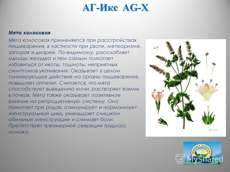 АГ-Икс AG-X Мята колосовая Мята колосовая применяется при расстройствах пищеварения, в частности при рвоте, метеоризме, запорах и диарее. По-видимому, расслабляет мышцы желудка и тем самым помогает избавиться от икоты, тошноты, неприятных симптомов у