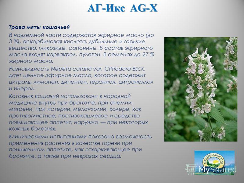 АГ-Икс AG-X Трава мяты кошачьей В надземной части содержатся эфирное масло (до 3 %), аскорбиновая кислота, дубильные и горькие вещества, гликозиды, сапонины. В состав эфирного масла входят карвакрол, пулегон. В семенах до 27 % жирного масла. Разновид