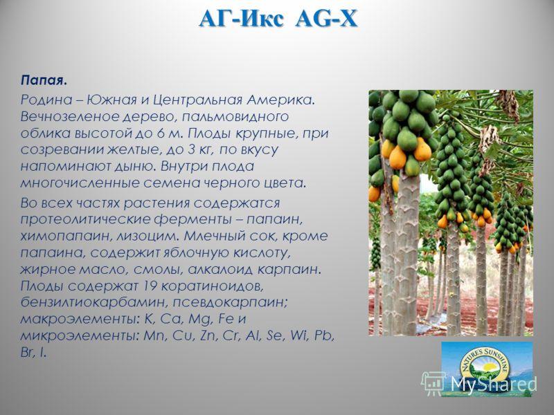 АГ-Икс AG-X Папая. Родина – Южная и Центральная Америка. Вечнозеленое дерево, пальмовидного облика высотой до 6 м. Плоды крупные, при созревании желтые, до 3 кг, по вкусу напоминают дыню. Внутри плода многочисленные семена черного цвета. Во всех част