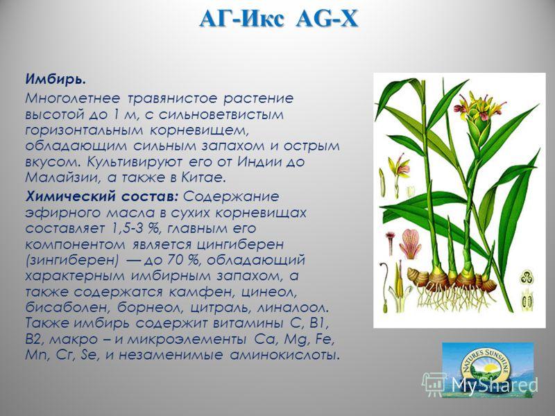 АГ-Икс AG-X Имбирь. Многолетнее травянистое растение высотой до 1 м, с сильноветвистым горизонтальным корневищем, обладающим сильным запахом и острым вкусом. Культивируют его от Индии до Малайзии, а также в Китае. Химический состав: Содержание эфирно