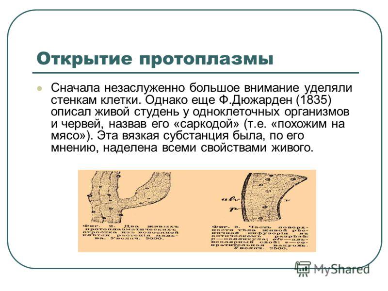 Открытие протоплазмы Сначала незаслуженно большое внимание уделяли стенкам клетки. Однако еще Ф.Дюжарден (1835) описал живой студень у одноклеточных организмов и червей, назвав его «саркодой» (т.е. «похожим на мясо»). Эта вязкая субстанция была, по е
