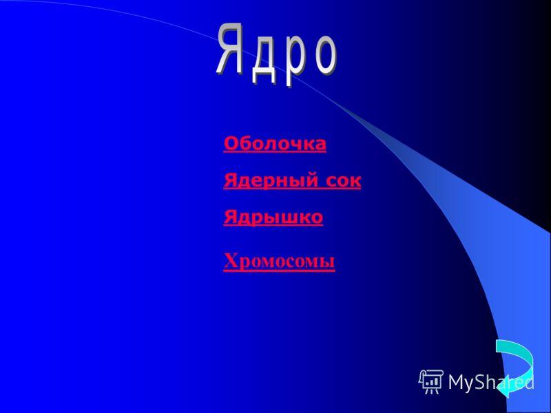 Оболочка Ядерный сок Ядрышко Хромосомы