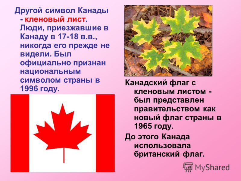 Другой символ Канады - кленовый лист. Люди, приезжавшие в Канаду в 17-18 в.в., никогда его прежде не видели. Был официально признан национальным символом страны в 1996 году. Канадский флаг с кленовым листом - был представлен правительством как новый