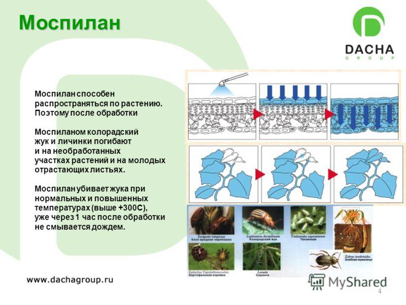 4 Моспилан Моспилан способен распространяться по растению. Поэтому после обработки Моспиланом колорадский жук и личинки погибают и на необработанных участках растений и на молодых отрастающих листьях. Моспилан убивает жука при нормальных и повышенных