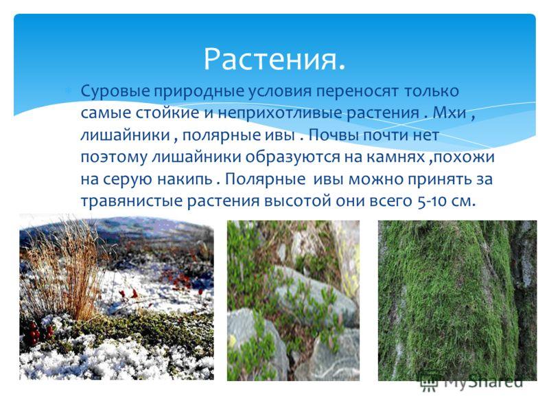 Доклад про растения ледяной зоны 3824
