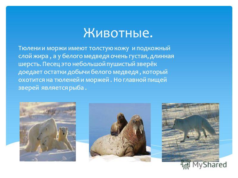 Доклад на тему животные ледяной зоны 8336