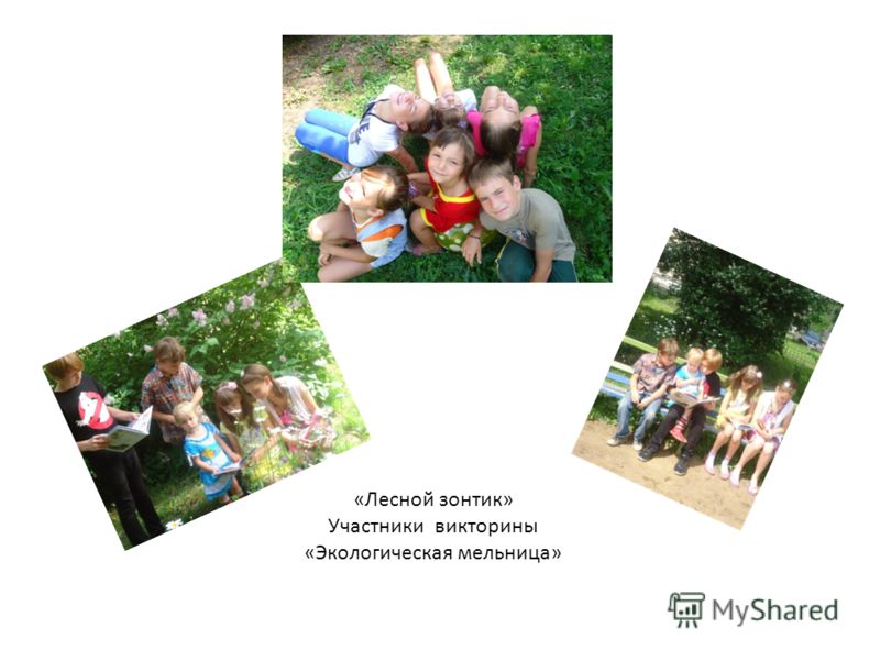 «Лесной зонтик» Участники викторины «Экологическая мельница»