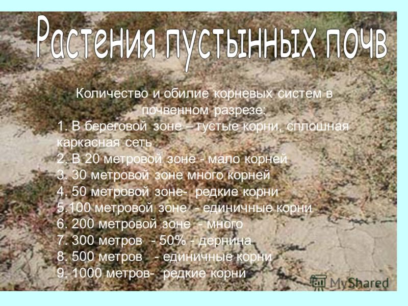 Количество и обилие корневых систем в почвенном разрезе: 1. В береговой зоне – густые корни, сплошная каркасная сеть 2. В 20 метровой зоне - мало корней 3. 30 метровой зоне много корней 4. 50 метровой зоне- редкие корни 5.100 метровой зоне - единичны