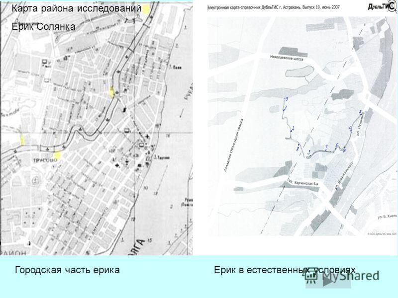 Городская часть ерика Солянка. Желтые точка-место взятия проб. Карта района исследований Ерик Солянка Городская часть ерика Ерик в естественных условиях