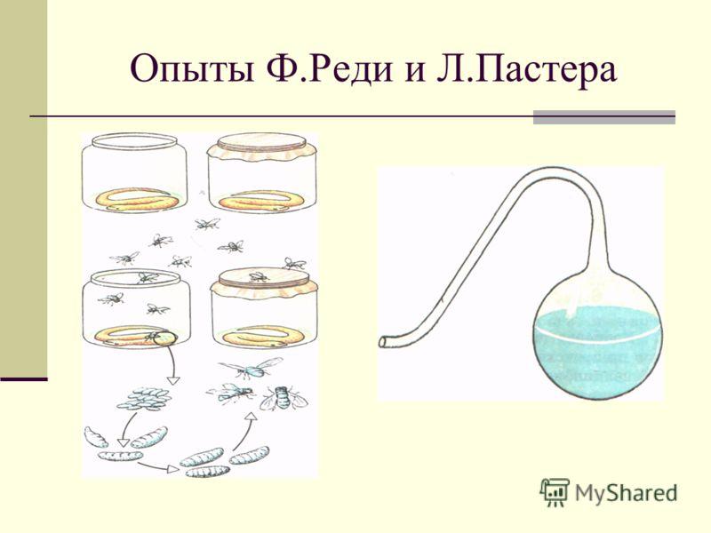 Опыты Ф.Реди и Л.Пастера