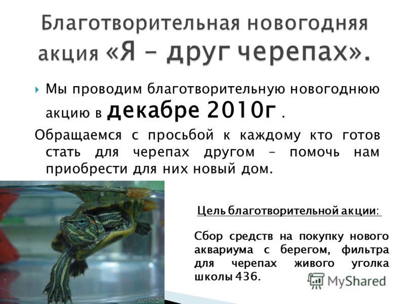 Мы проводим благотворительную новогоднюю акцию в декабре 2010г. Обращаемся с просьбой к каждому кто готов стать для черепах другом – помочь нам приобрести для них новый дом. Сбор средств на покупку нового аквариума с берегом, фильтра для черепах живо